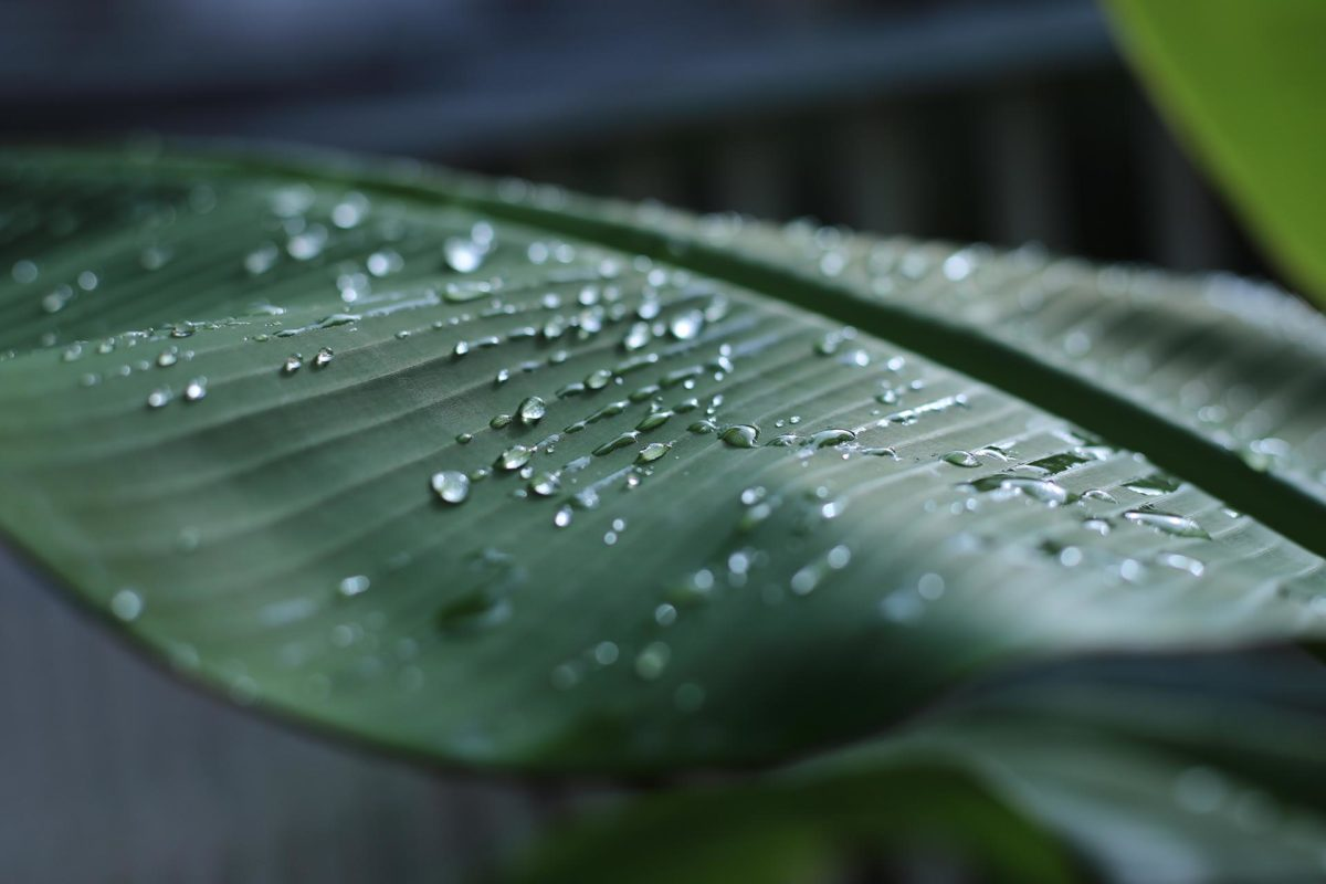 Prêmios América Latina Verde abrem inscrições para projetos sociais e ambientais